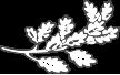 leaf-free-img